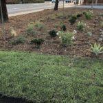 San Diego landscape trial