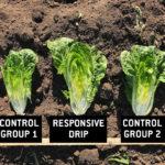 RDI - yield comparison