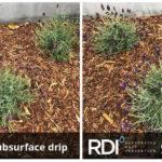 El Segundo project, RDI vs Netafim drip