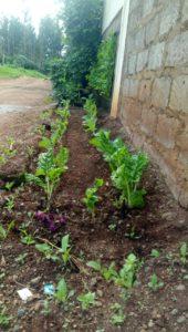 RDI GrowStream installed in Kenya