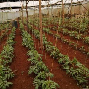 RDI GrowStream greenhouse installation