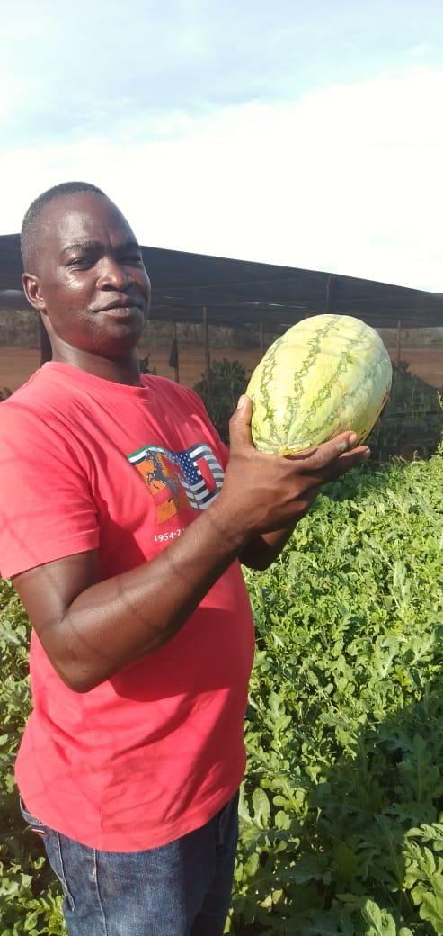 RDI watermelons harvested in Kakuma