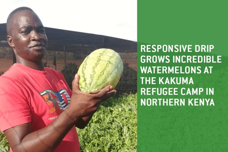 RDI grows watermelons at the Kakuma refugee camp in Kenya