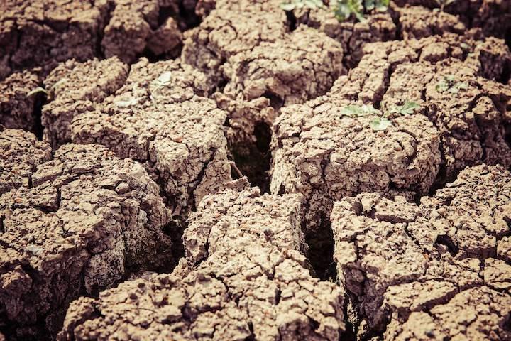 RDI battles drought